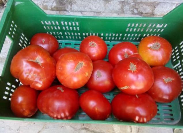 En Ebay puedes conseguir hasta 50 semillas por un euro