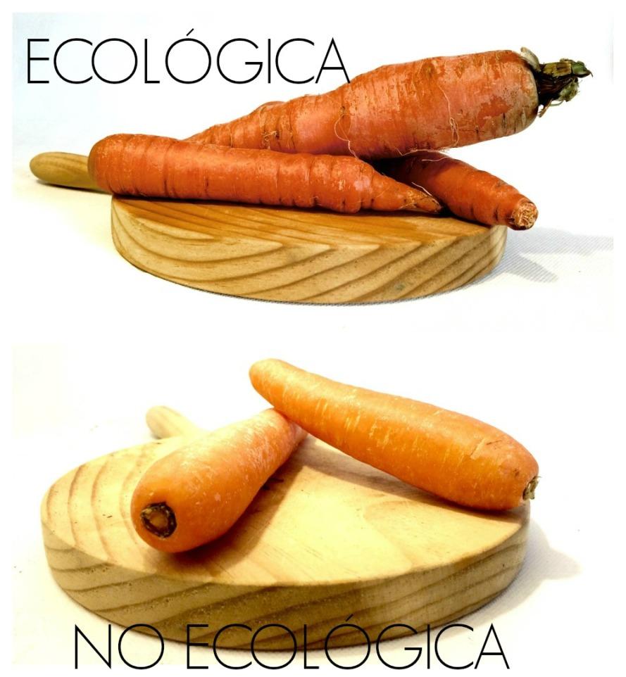 zanahorias1000LETRAS
