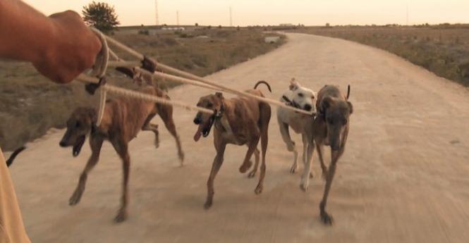 """Captura del documental """"Febrero, el miedo de los galgos"""""""