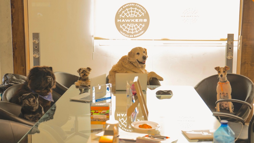 Dogs office.